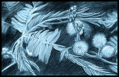 Beautiful drawing of a flower symbolic for the next project for Sunmoonstars Film Studio.